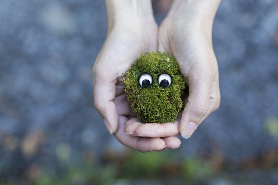 Ambiente: cercasi idee e offresi contributi
