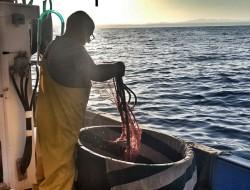 """""""Pesca all'alba"""" di Osvaldo Danzi. Immagini a ®libero. La vita si condivide con tutti."""