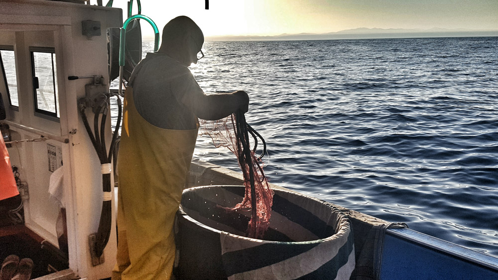Work with the sea – La pesca
