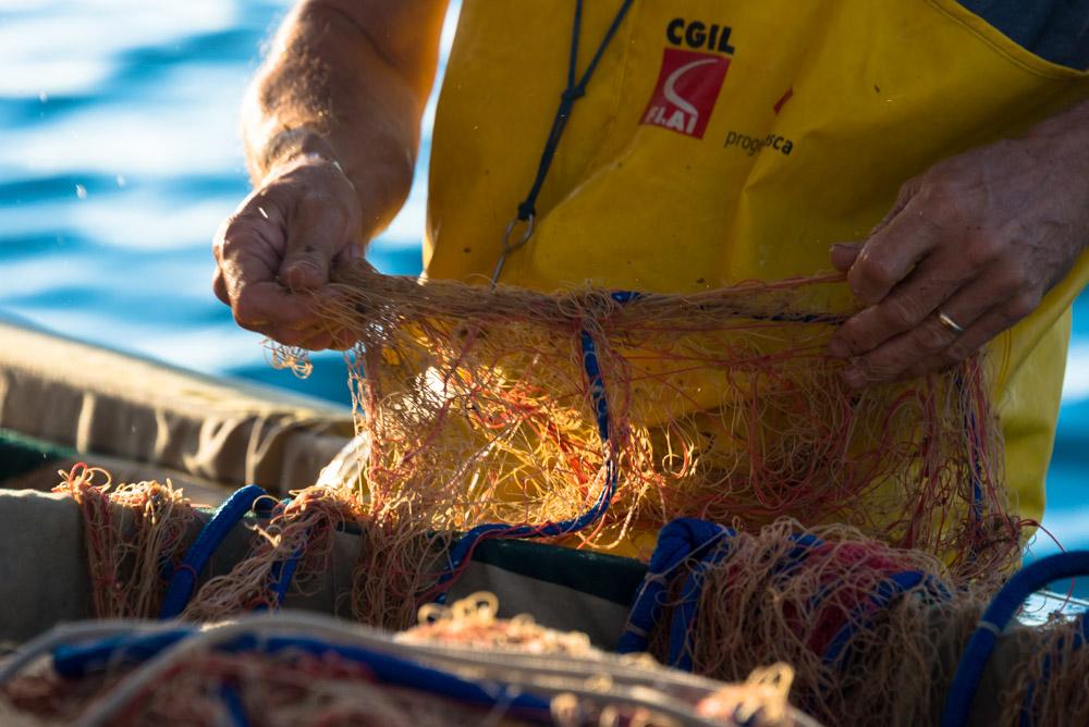 """""""Pescato"""" di Osvaldo Danzi. Immagini a ®libero. La vita si condivide con tutti."""