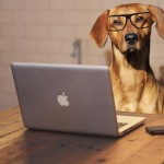 """""""Harware"""": cane davanti al computer"""