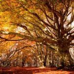 Un esempio di foliage, tra le attrattive del turismo marchigiano.