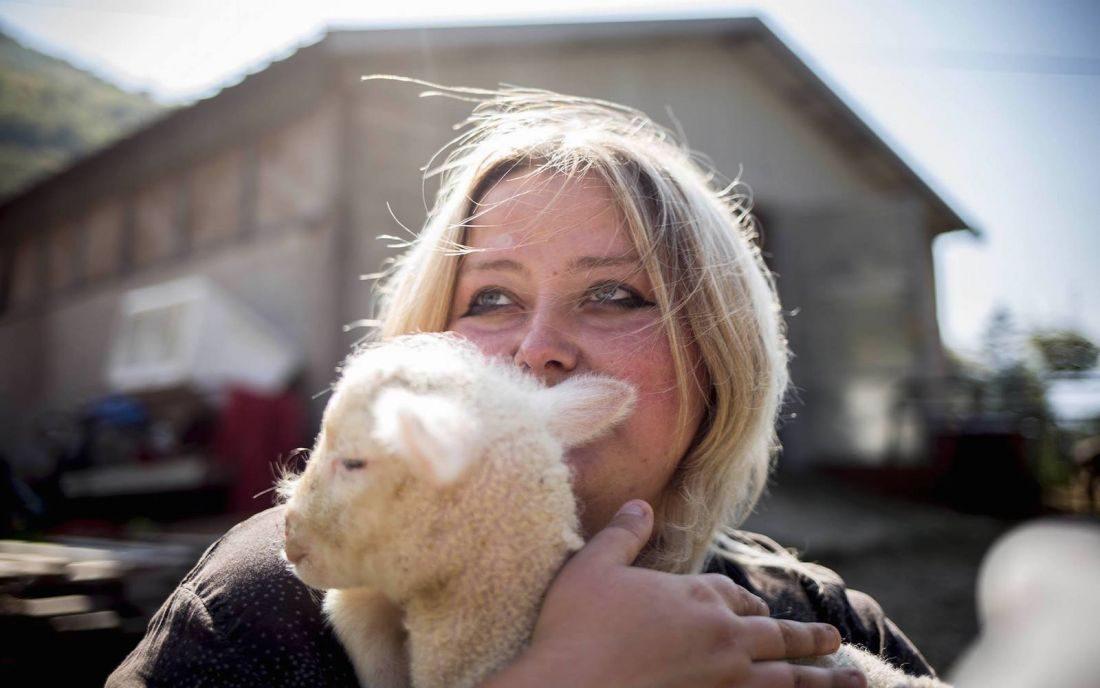 Terremoto Marche e lana Sopravissana: la vera pecora è la politica
