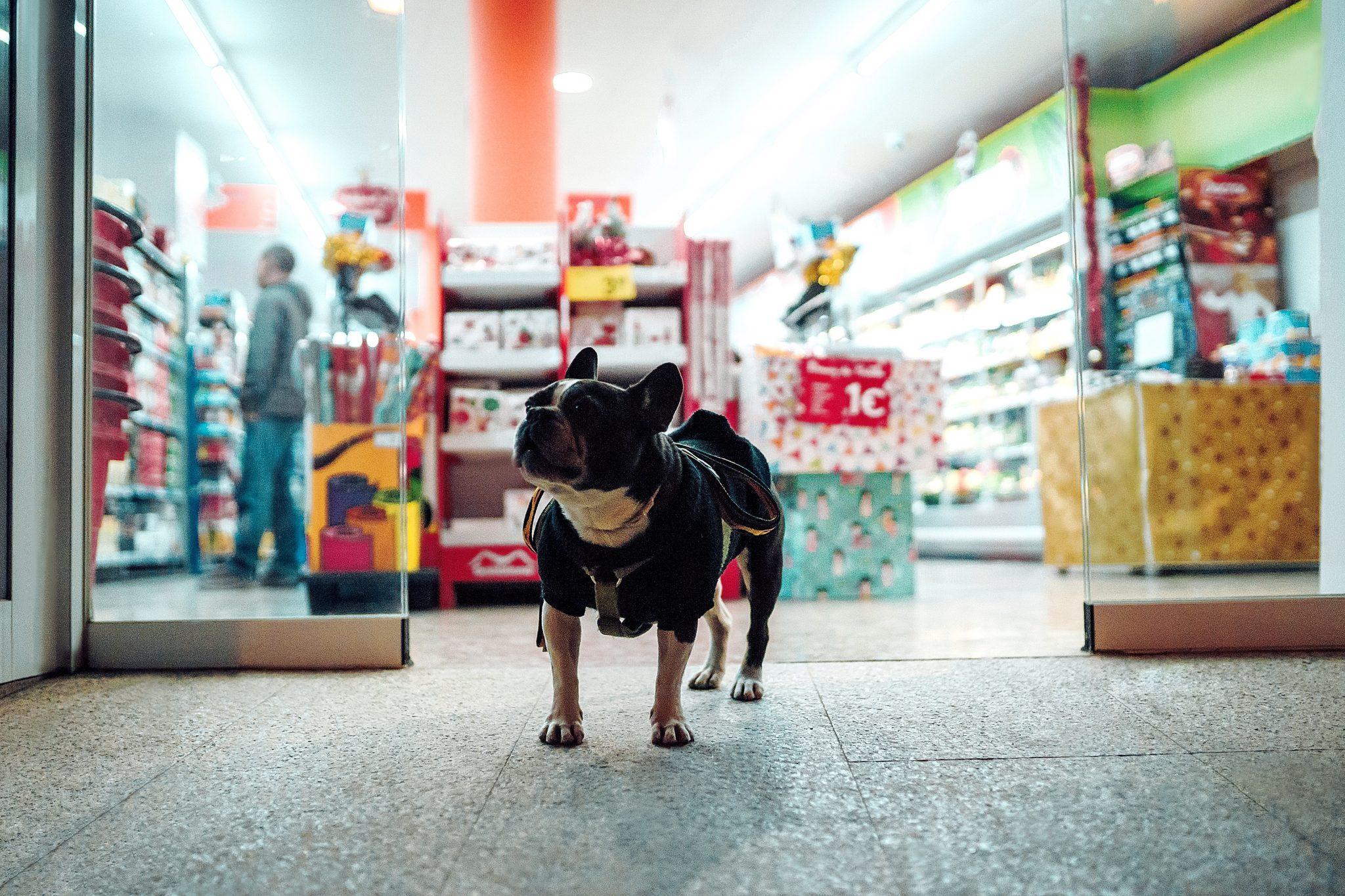 Un consumatore ideale per la Pet Economy: un bulldog francese fuori da un negozio per animali