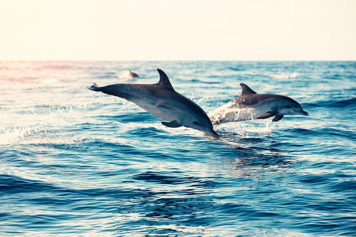 L'inverno in cui tornarono i delfini