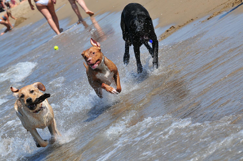 COVID-19, mondo cane! L'Italia in stallo dei dog sitter e delle dog beach