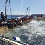 La pesca del tonno nelle tonnare sulcitane.