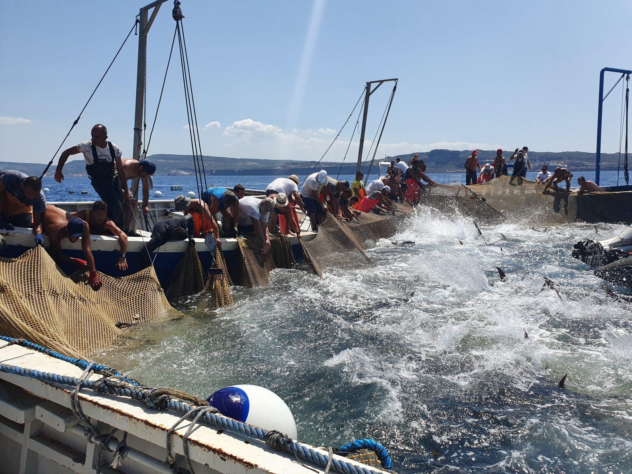 Tonnare sulcitane: l'oro rosso di Sardegna che fa bene all'occupazione