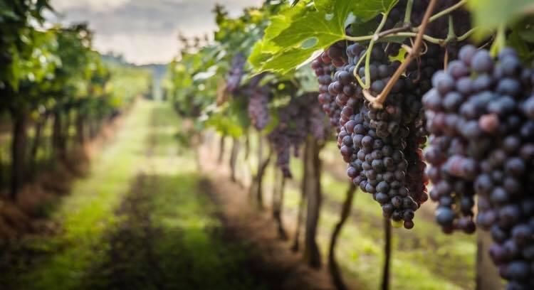 Annata 2020: più che fermo, il vino è immobile
