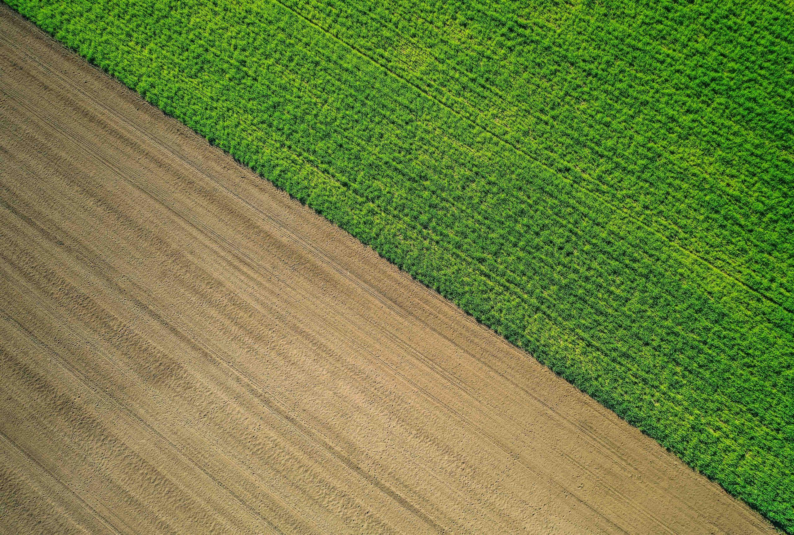 Condizionalità sociale: l'agricoltura europea chiude i rubinetti ai caporali