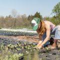 Agricoltura biologica: una coltivatrice nel suo campo